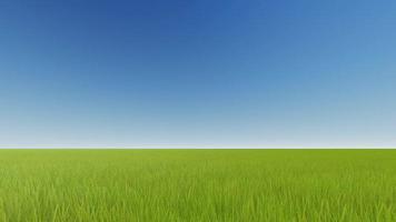 campo verde e cielo azzurro chiaro video