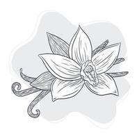 Vanilla Spicy Sticks and Flower Vintage Illustration vector