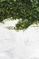 Ramas largas de una planta sobre una pared blanca con copyspace foto