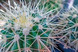 Close up cactus plant in nature photo