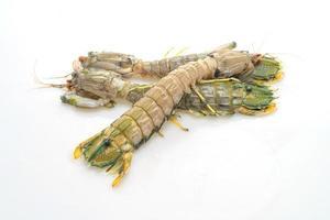 Camarón mantis fresco aislado sobre fondo blanco. foto