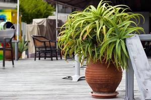 Decorative aloe vera plant in flowerpot photo