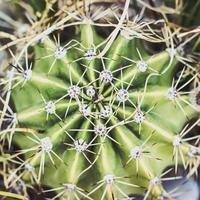 Close up of a small cactus plant, top view nature background photo
