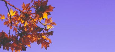 Autumn yellow leaves against blue sky autumn background with copy space photo