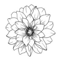 Decorative flower isolated white background. vector