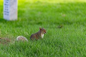 Squirrel in the park photo