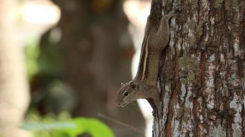 esquilo em uma árvore video