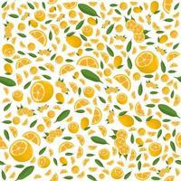 Ilustración sobre el tema kumquat transparente de color grande vector