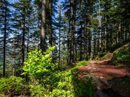 Stunning landscapes of the Vosges in France photo