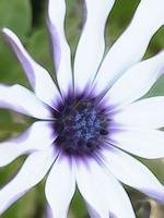 Close up summer flowers in nature photo