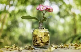 Tree with flowers growing on glass piggy bank from pile of gold coins with blurred background photo