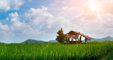 Escena rural cabaña abandonada se encuentra con plántulas de arroz verde en un campo de arroz con un hermoso cielo y nubes foto