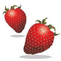 strawberry fruit illustration vector