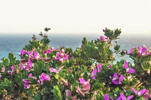 Istoda bush with purple flowers on the background of the sea. Banner photo