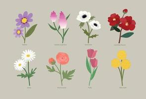 Types of flowers vector