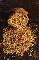Rice paddy in brown sacks photo