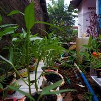 foto de plantas verdes que crecen en abundancia