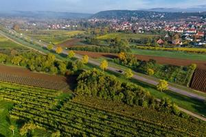 Vineyards in the Vosges foothills, France photo