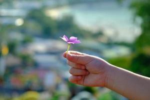pequeñas flores rosas en manos de un niño con fondo borroso. foto