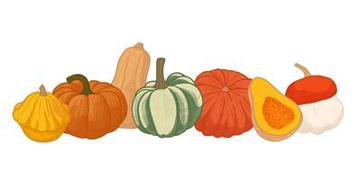 Different autumn  pumpkins set. vector