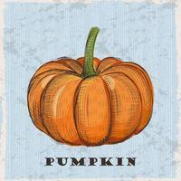 Pumpkin vector illustration in engraved vintage style
