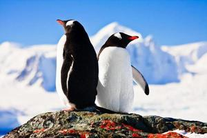 Two penguins in mountain photo