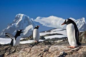 Three penguins dreaming photo