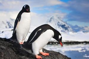 penguins  in Antarctica photo