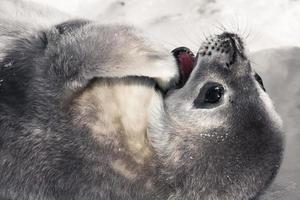 Seal on the beach photo