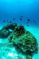 escena submarina con arrecifes de coral y peces. foto