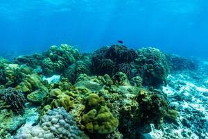 escena submarina con arrecifes de coral, isla raya, phuket, tailandia. foto