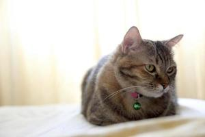 Young Tabby Cat photo