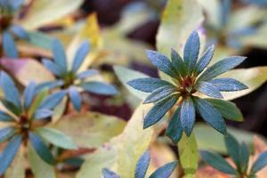 naturaleza en la temporada de otoño foto