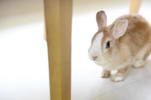 conejo en la casa foto