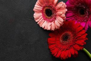 Flores de gerbera brillante sobre fondo negro foto