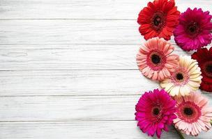 Flores de gerbera brillante sobre un fondo de madera blanca foto