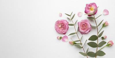 Top view roses flowers with copy space. High quality beautiful photo concept
