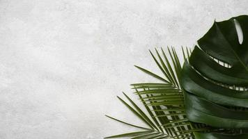 Top view monstera other leaves with copy space. High quality beautiful photo concept