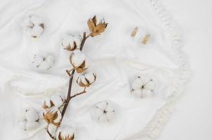 Top view cotton flowers arrangement. High quality beautiful photo concept