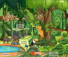 Diagram showing ecosystem in firest scene with wild animals vector