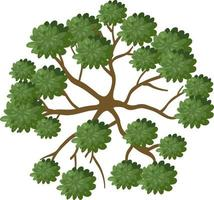 Top view of a tree with branch isolated on white background vector