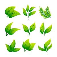 colección de iconos de hojas vector
