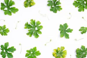 Composition of healthy fresh green bitter gourd leaves photo