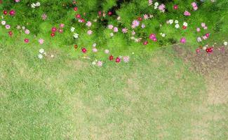 vista superior del parque de flores cosmos foto