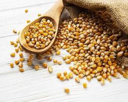 semillas de maíz secas foto