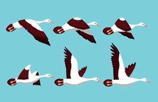 Phases of movement of the wings in the flight of a bird vector