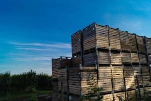 Apple harvest in the old Land Hamburg photo