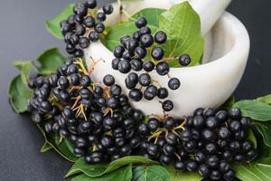 serbal negro aronia chokeberry foto