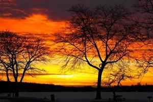 silueta de árboles con cielo al atardecer foto