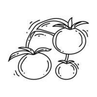 Gardening tomato icon. hand drawn icon, outline black, vector
